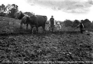 Ramassage des pommes de terres en famille : Léon Peyrat, une de ses filles et son père. Photo Baptiste Peyrat.